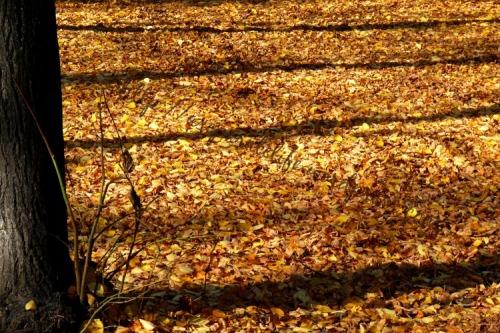 Fallen leaves, Autumn in Warsaw 2013